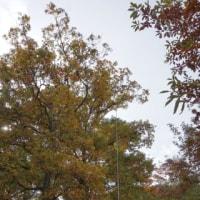 高取山中腹移動 11月20日