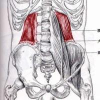 腰方形筋と頸部の可動域の関係性     金沢市   野々市市   整体   腰痛