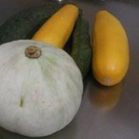 北総菜園日誌:2010梅雨の晴れ間の収穫