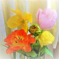 今年(2017)の春の花パート2 チューリップ