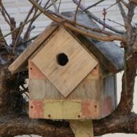 小鳥の巣箱、今年はどんな展開に