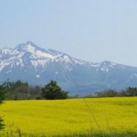 鯵ヶ沢の菜の花2017