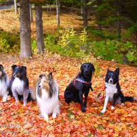 紅葉狩り♪ ~滝野すずらん丘陵公園~
