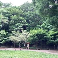 都立小宮公園が楽しい