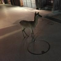 子鹿が鳴く夜より