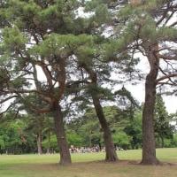 西武線稲荷山公園