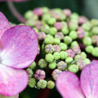 花とマクロレンズ
