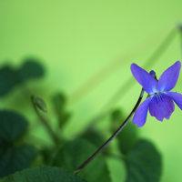 晩秋の花・木 161129