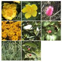 20040522花の美術館