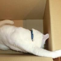 大きな箱から・・