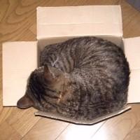 気に入った箱