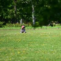 緑の風の中で 札幌百合が原公園
