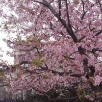 [春]もうすぐ