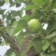 きになる桃とリンゴ