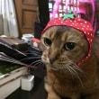 かわいいかわいい 猫野菜ちゃん?