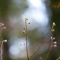 -春のつま先-
