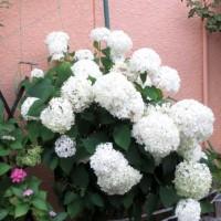 カルマ解消㉘のお花を流しました