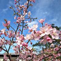 花々の季節