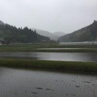 ◇5月発送◇特別栽培米◇
