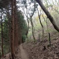 ショウジョウバカマとカタクリ -天狗谷ルートで行く葛城山ー その2