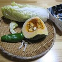 実物の野菜を触る【1歳半~】