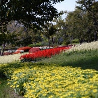 馬見丘陵公園の花々