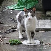 母さん猫の魔法