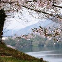 都道府県庁所在市別「さんま、たい、ぶり、いか、たこ、えび、かに、さしみ盛合せ」の消費について(2)