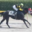 ドリームキラリ 在厩レポート 2015/8/13
