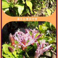 生け花と家のホトトギスの花