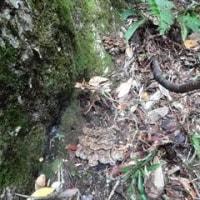 舞茸の木は見ている・・・・