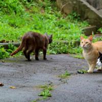 梅雨真っ最中の沖縄の猫たち 2016年5月 その6