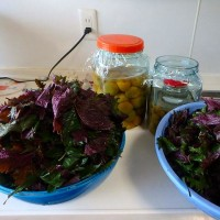 メロンの試食?と塩漬けの梅に紫蘇を入れたこと。