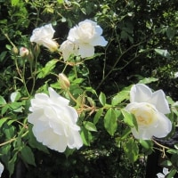 6/22(木)のイキメンニュース~追分&軽井沢周辺の情報