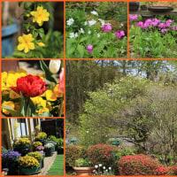 今年の春の庭