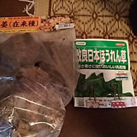 生姜とホウレン草