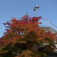 景色は秋ですよ