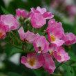 庭のお花達 カサブランカ他