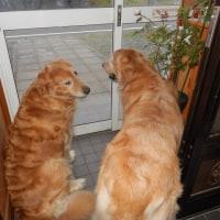 今日のお犬様とダチョ子&ダチョ子母さん・・・・・