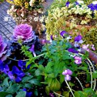 春待ち花壇