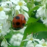蕎麦畑で蜜を吸いまくる昆虫たち