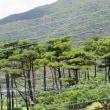 奄美4島巡り行ってきたよ!NO 5