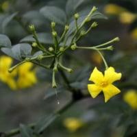 花の絨毯 エゴノキの花