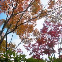 日本庭園の秋(Ⅱ)