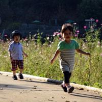 2016年(横須賀)久里浜花の国  ④  子供とコスモス&GODZILLA
