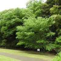 水戸の保存樹林地