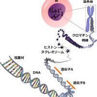 細胞の中の分子生物学 最新・生命科学入門 (森 和俊)
