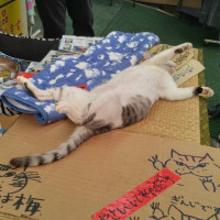 沖縄は、暑いです~(=^ェ^=)