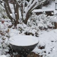 雪・ゆき・ユキ