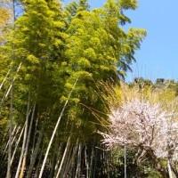 鹿児島ツアー:仙巌園
